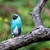 Bird in the hummingbird aviary