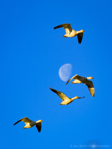 Lunar Fly-By