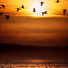 Geese at sunset, Tule Lake
