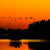 Birds returning to roost