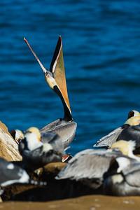 Pelican Head Throw