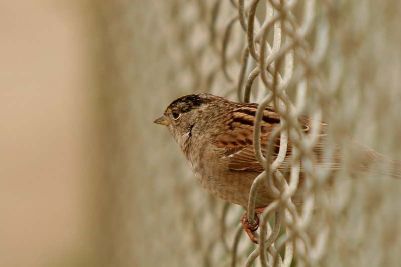Sparrow Escape, Central Coast<br /> (California, 2006)
