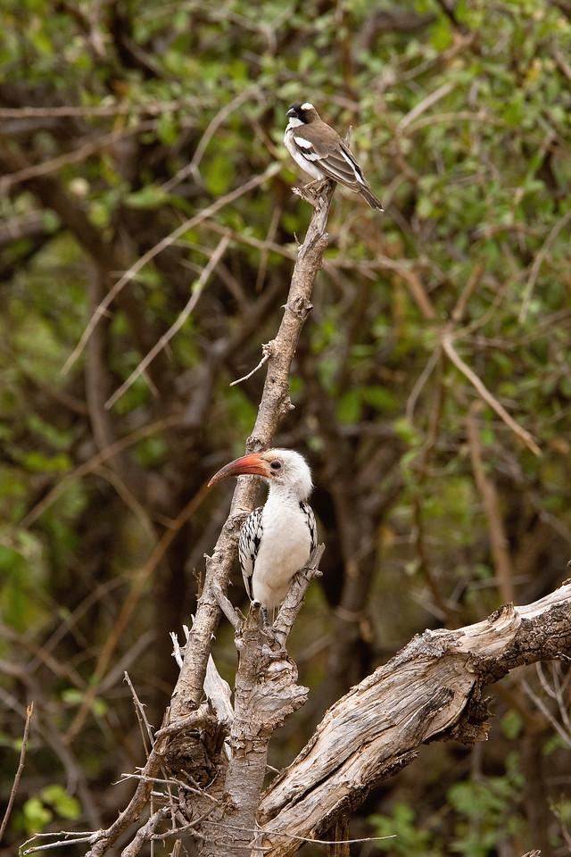 20100902_Samburu_0067