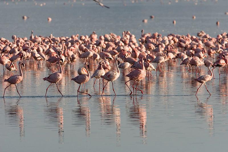2007 07 22 Lake Nakuru 085