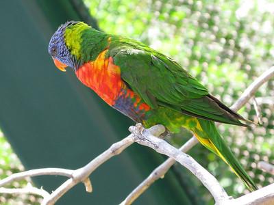 CO 2011 06 Denver Zoo 43