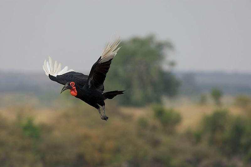 2007 07 25 Masai Mara 754