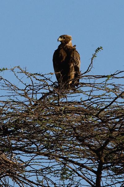20100903_Samburu_125