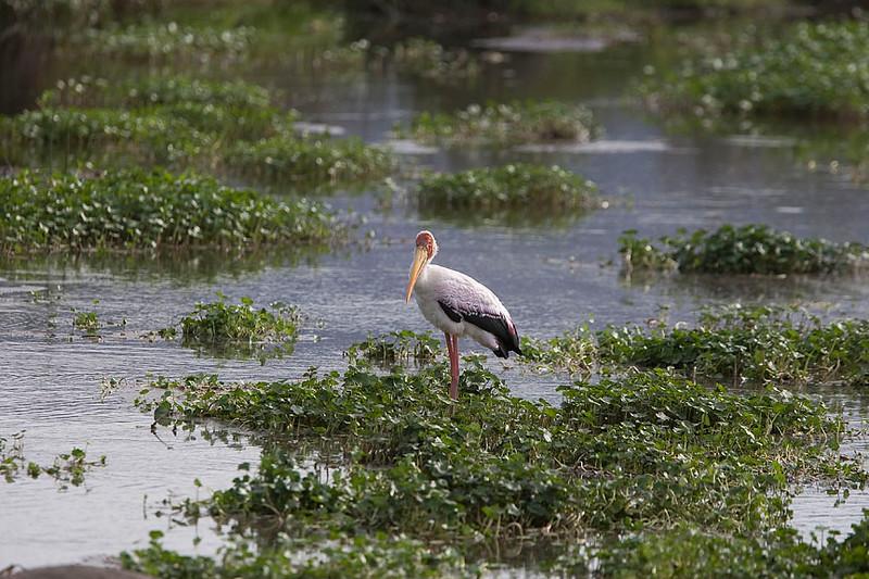 2007 07 18 Ngorongoro 526