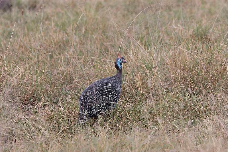 2007 07 24 Masai Mara 310