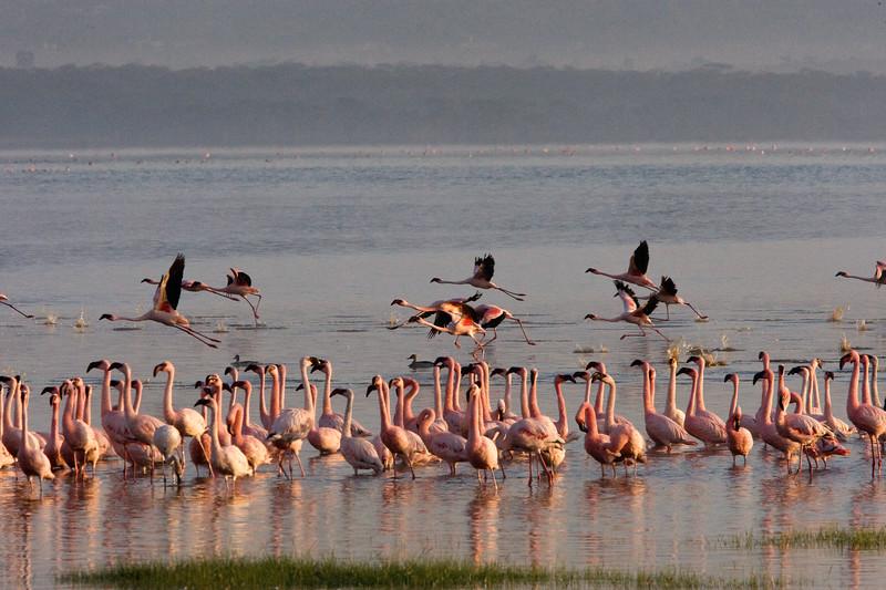 20100907_Lake Nakuru_091
