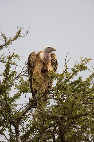2007 07 23 Masai Mara 042