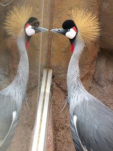 CO 2010 09 Denver Zoo 107
