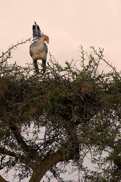 2007 07 26 Masai Mara 484