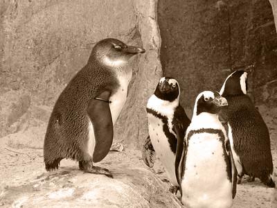 Denver Zoo 1108 (46) sepia