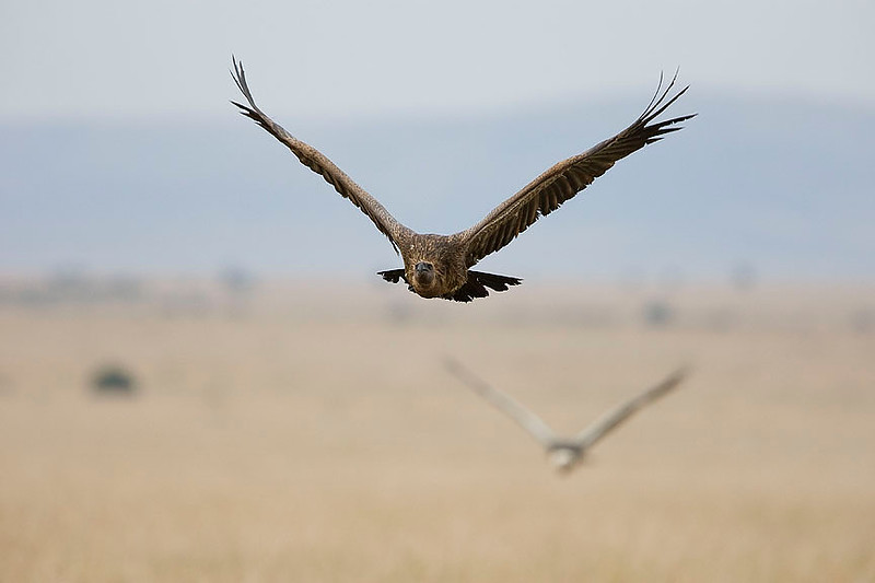 2007 07 25 Masai Mara 150