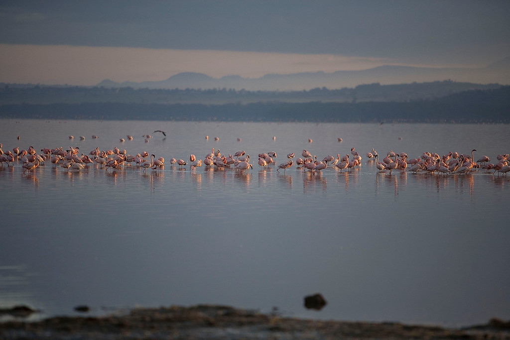 2007 07 22 Lake Nakuru 340