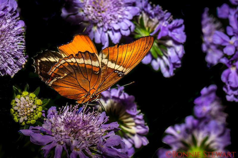 Golden Butterfly