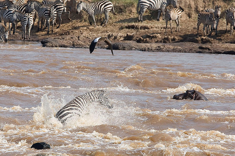 2007 07 26 Masai Mara 167