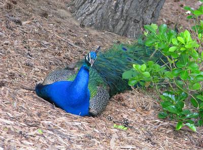 CO 2011 06 Denver Zoo 55