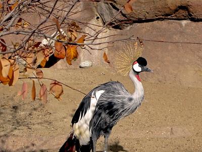 Denver Zoo 1108 (8)
