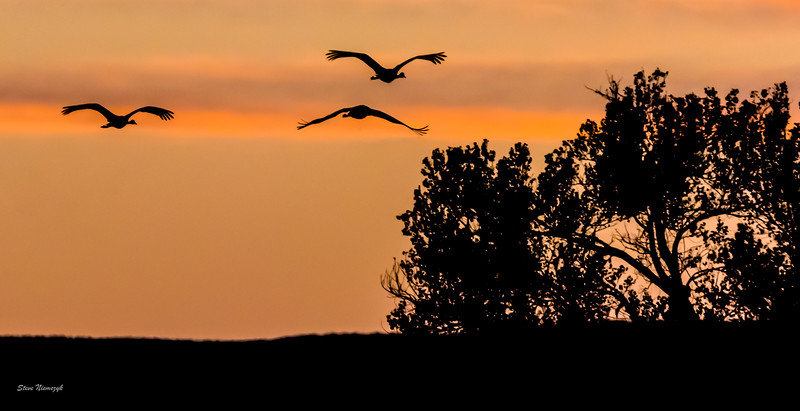 Sand Hill Cranes at Sunset