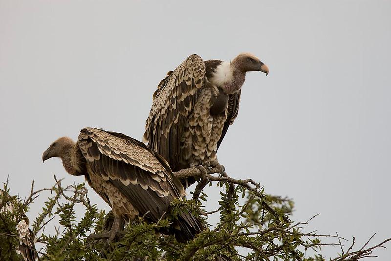 2007 07 23 Masai Mara 023