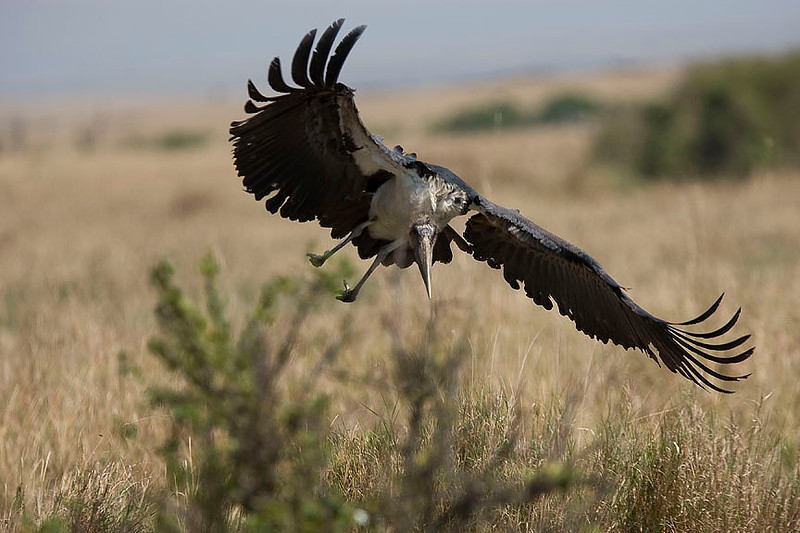 2007 07 25 Masai Mara 372