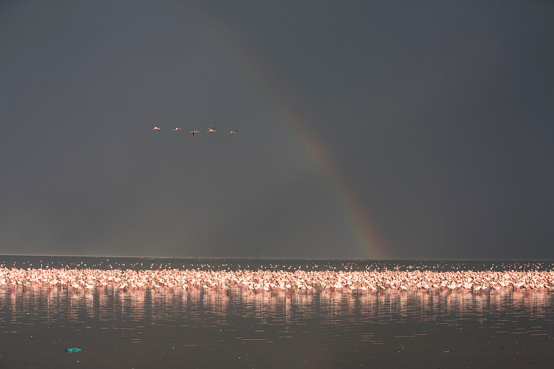2007 07 22 Lake Nakuru 575