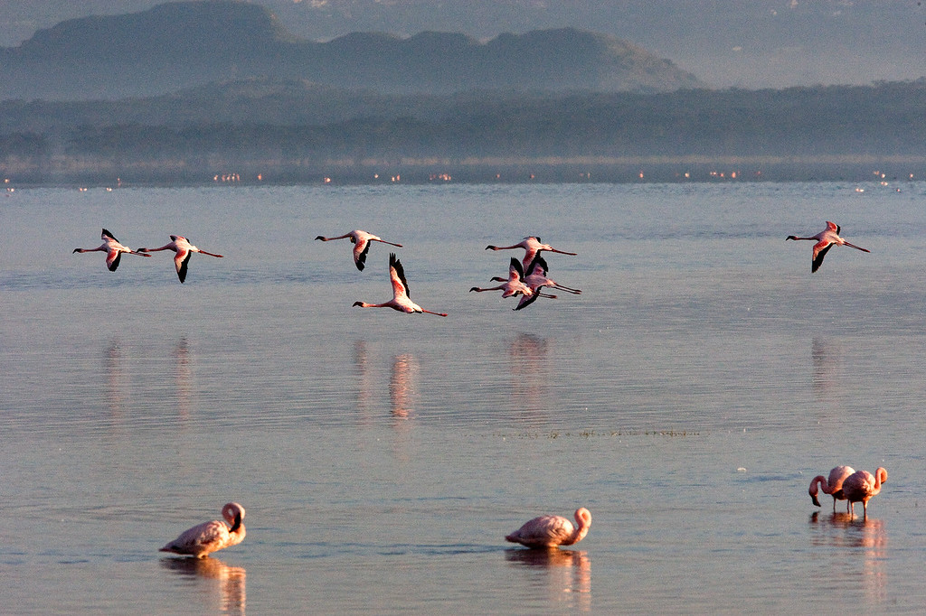 20100907_Lake Nakuru_141