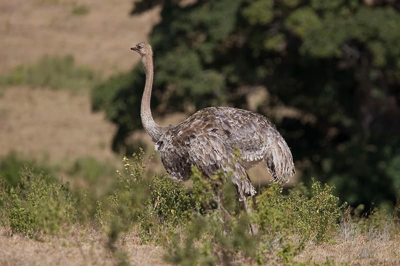 2007 07 17 Ngorongoro  030