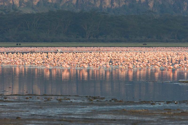 2007 07 22 Lake Nakuru 029