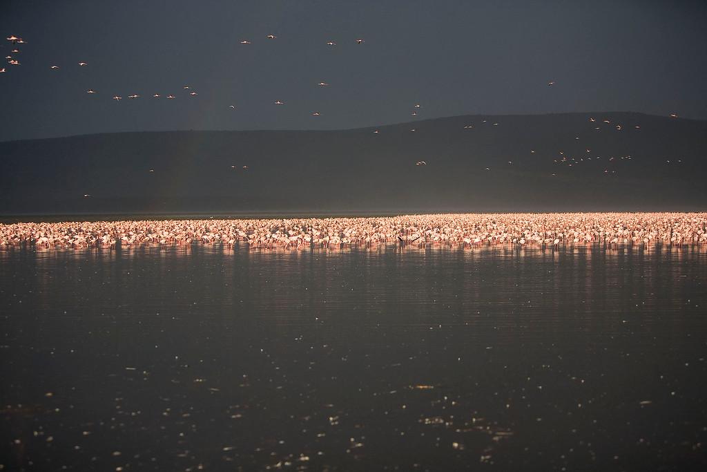 2007 07 22 Lake Nakuru 590