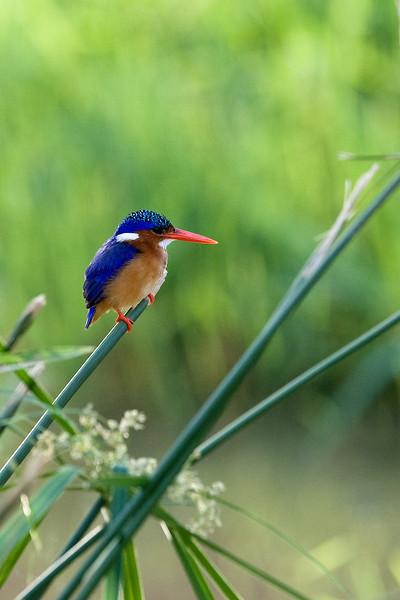 20100905_Samburu_064