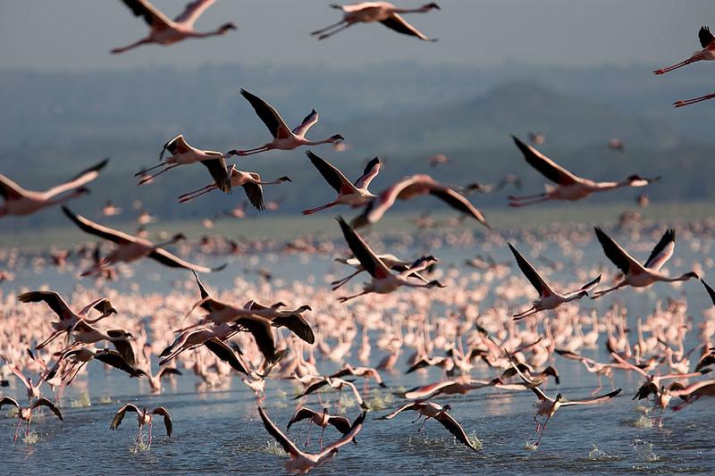 2007 07 22 Lake Nakuru 203