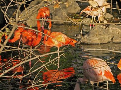 Denver Zoo 1108 (66)