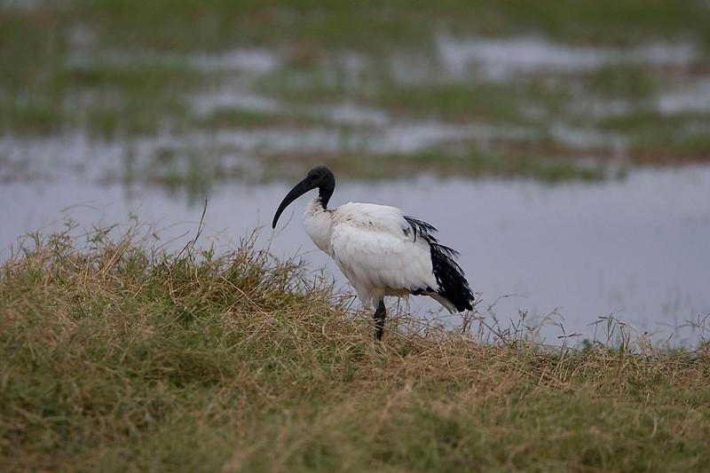 2007 07 20 Amboseli 103