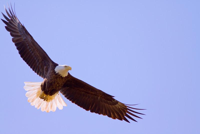 Shiloh Eagle Fight