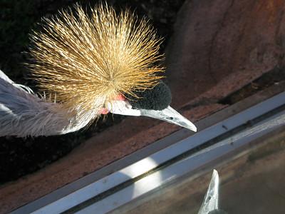 CO 2010 09 Denver Zoo 13