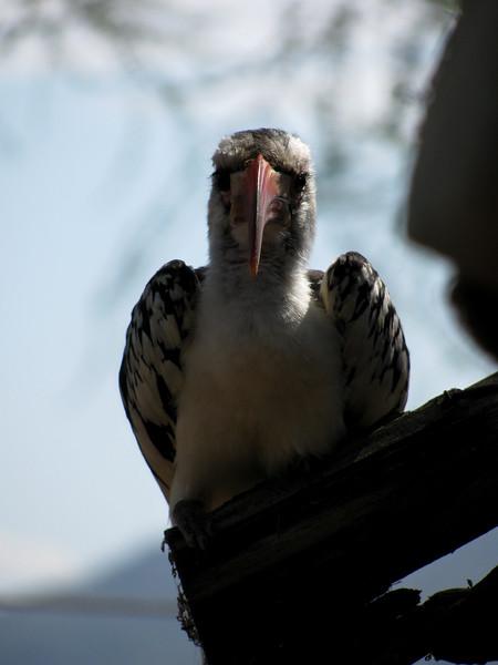 20100903_Samburu_0841
