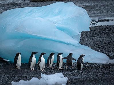 Adélie penguins, Antarctica