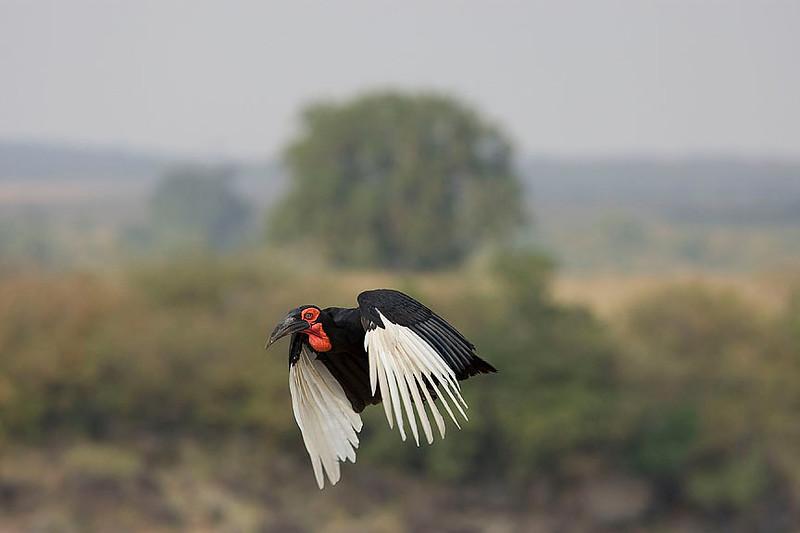 2007 07 25 Masai Mara 756