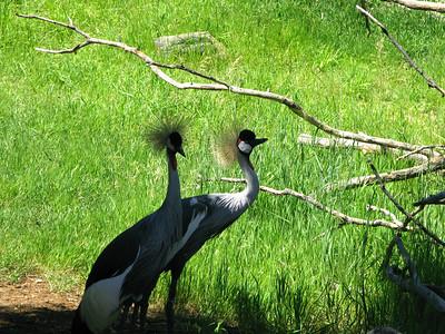 CO 2009 Denver Zoo 0618 (4)