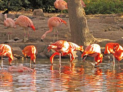 Denver Zoo 1108 (64)