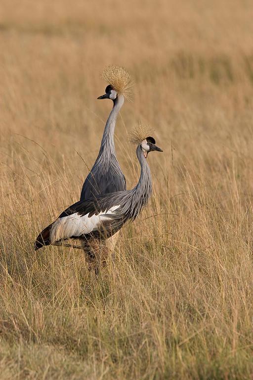 2007 07 26 Masai Mara 146