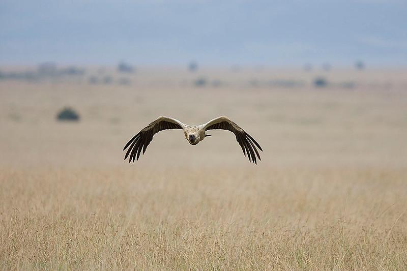 2007 07 25 Masai Mara 159