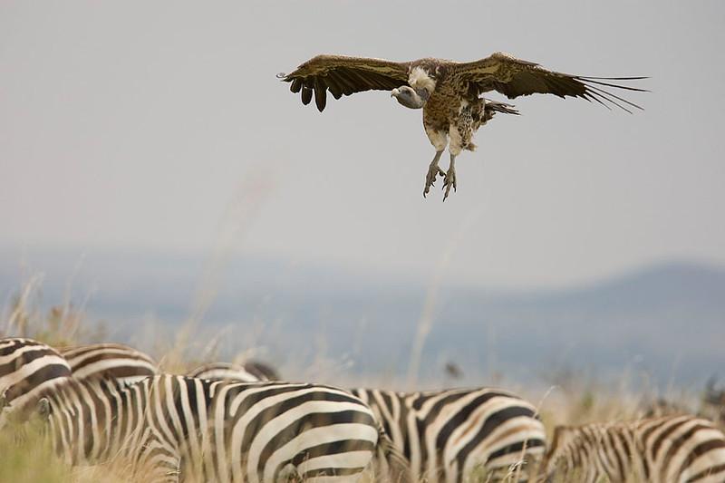 2007 07 23 Masai Mara 036