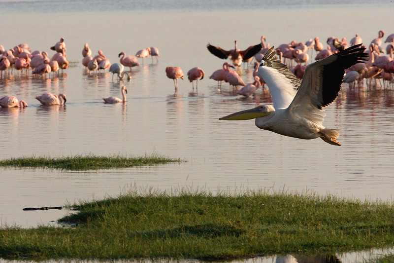20100907_Lake Nakuru_151