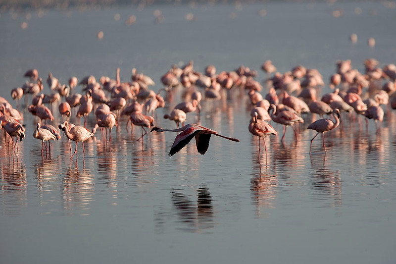 2007 07 22 Lake Nakuru 105
