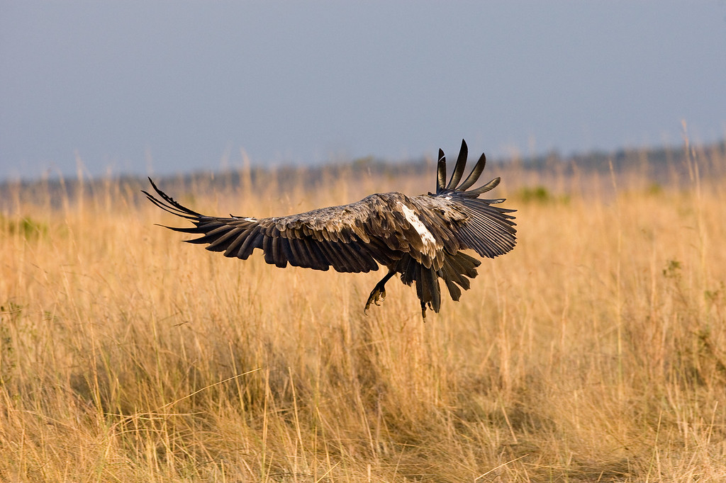 20100909_Maasi Mara_247