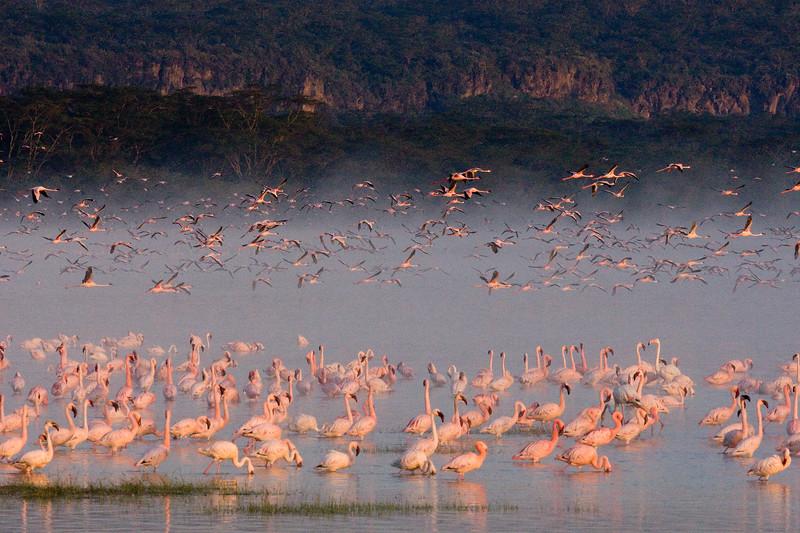 20100907_Lake Nakuru_026